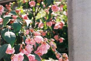 花の写真・画像素材[576134]