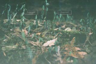 小さな森の世界の写真・画像素材[1168860]