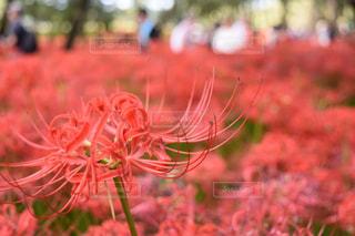 近くの花のアップの写真・画像素材[810568]