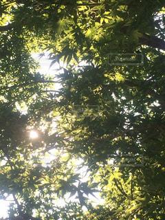 木の写真・画像素材[564383]