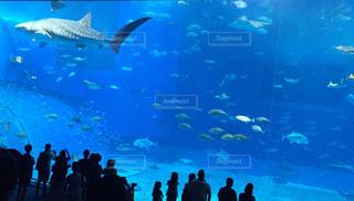 No.574156 魚
