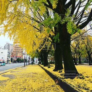 秋の写真・画像素材[565074]