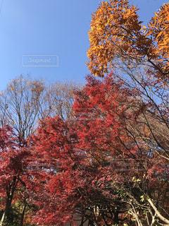 近くの木のアップの写真・画像素材[905541]