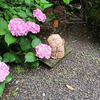 山寺の紫陽花の写真・画像素材[3528914]