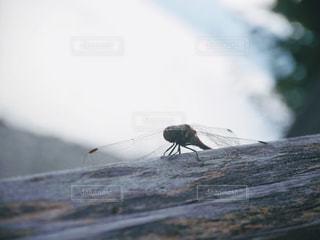 自然の写真・画像素材[568113]