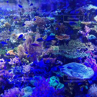 No.569417 魚