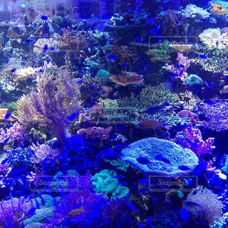 No.569418 魚