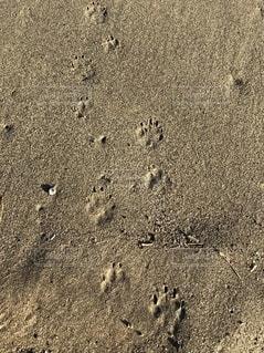 犬の足跡の写真・画像素材[2704226]