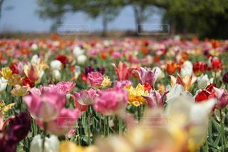 花の写真・画像素材[569732]