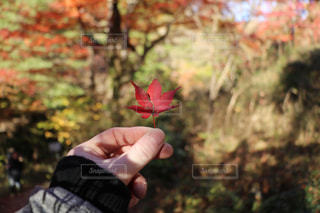 花を持っている手の写真・画像素材[897271]