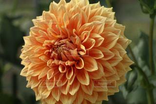 花の写真・画像素材[1578204]
