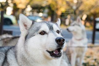 犬の写真・画像素材[577252]