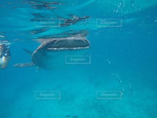 海の写真・画像素材[566278]