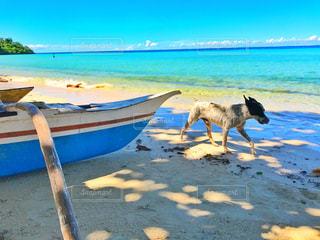 犬の写真・画像素材[579086]