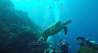 海の写真・画像素材[595980]