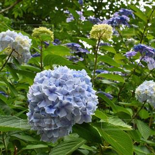 花の写真・画像素材[566257]