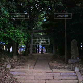 木の写真・画像素材[566261]