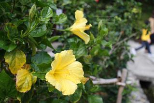 緑の葉と黄色の花の写真・画像素材[1619130]