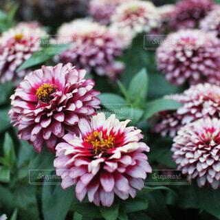 花のクローズアップの写真・画像素材[4033246]