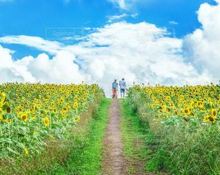 風景 - No.699520