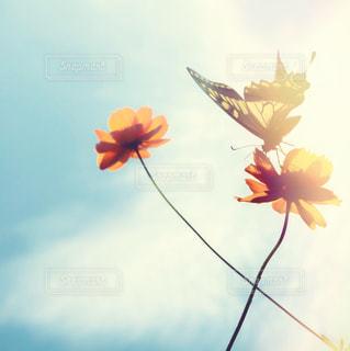 秋の写真・画像素材[699521]