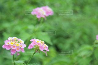 花の写真・画像素材[579365]