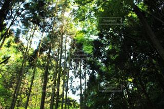 森林の写真・画像素材[568019]