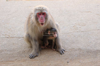 猿の写真・画像素材[568024]