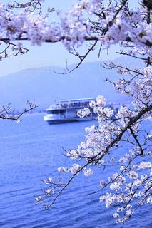 桜 - No.568044
