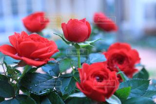 花の写真・画像素材[572854]