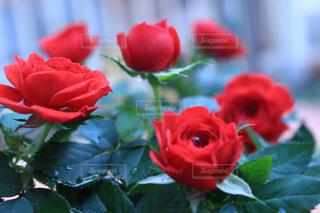 花の写真・画像素材[572858]