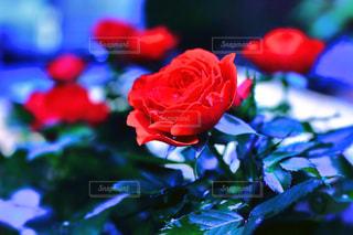 花の写真・画像素材[574480]