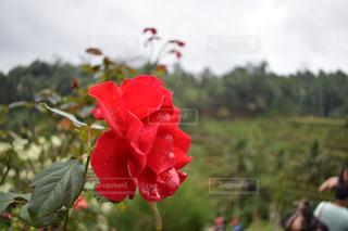 Bali - No.573474