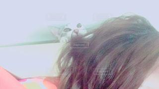 猫 - No.569287