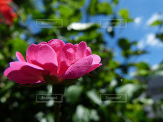 花の写真・画像素材[569303]