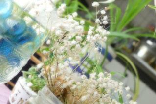 花の写真・画像素材[582528]
