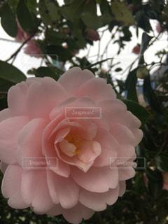 近くの花のアップの写真・画像素材[1110636]