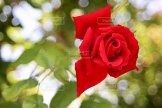 近くの花のアップの写真・画像素材[1266578]