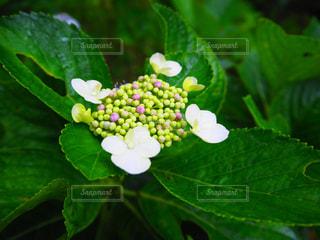花の写真・画像素材[576671]