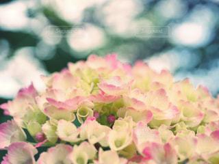 No.569935 花