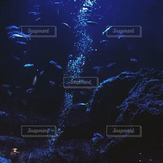 No.569991 魚