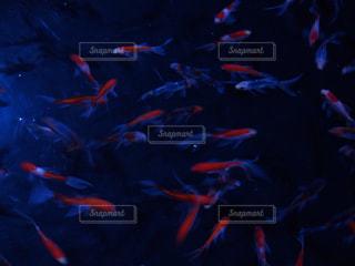 魚の写真・画像素材[570097]