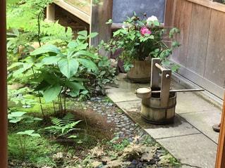 庭の写真・画像素材[570133]