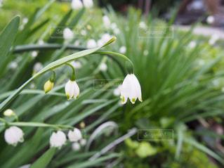 花の写真・画像素材[572015]