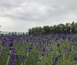 花の写真・画像素材[586387]