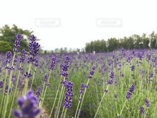花の写真・画像素材[586388]