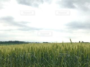 植物の写真・画像素材[588860]