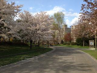 No.570688 桜