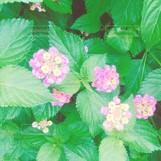 花の写真・画像素材[670308]