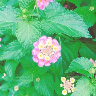 花 - No.670309
